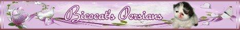 bicocats banner